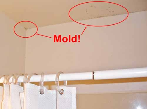 how to get rid of black mold on drywall. Black Bedroom Furniture Sets. Home Design Ideas