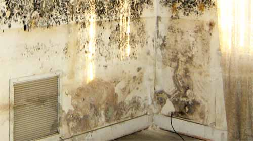 how to get rid of black mold from drywall