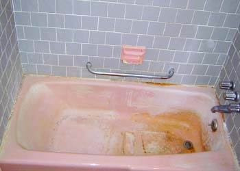 pink fungus in shower