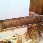 Mold Behind Shower Walls