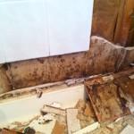 Mold Behind Shower Walls
