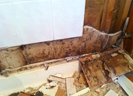 Black Mold Behind Shower Walls