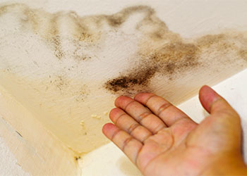 Mold On Home And Effects On Your Body