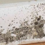 How Does Mold Grow: The Simple Science