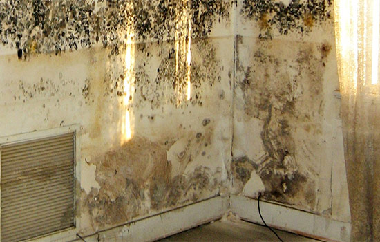 best way to clean and get rid of mold on walls