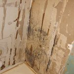 Mold Behind Shower Wall And Tiles Bathroom