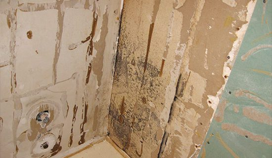 Black mold behind shower wall