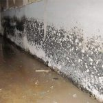 How To Detect Mold On Walls