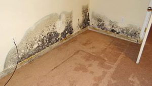 Mold in Apartment What You Should Do