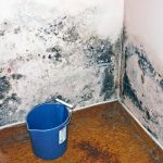 How to Prevent Mold ‒ The Ultimate Guide