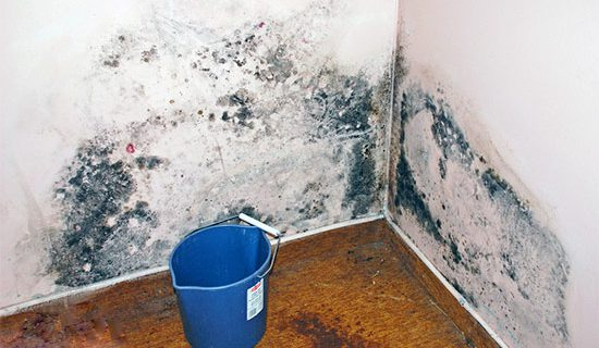 How to Prevent Mold