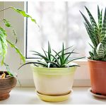6 All-Natural Ways to Purify the Air in Your Home