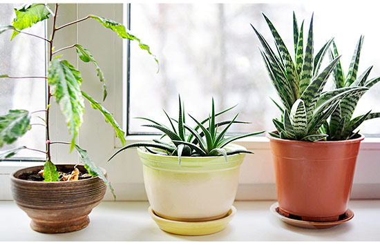 All-Natural Ways to Purify the Air