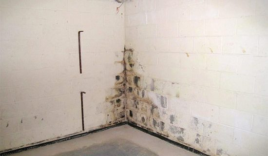 Prevent and Control Mold in Your Basement