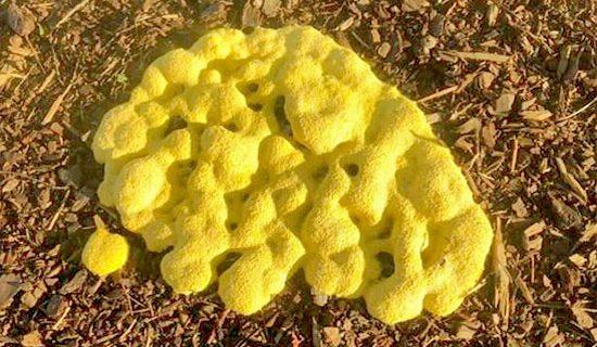 yellow mold grow