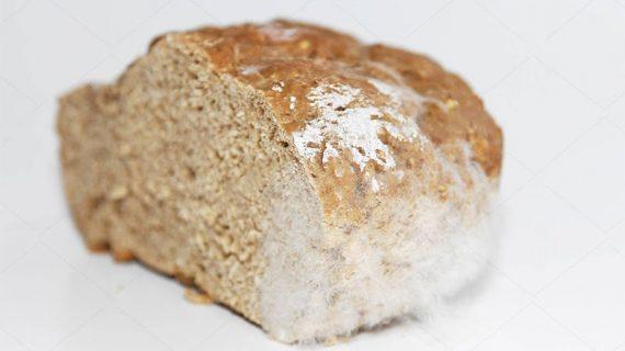 White mold on bread