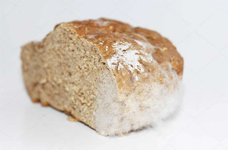 White mold on bread
